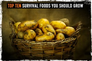 Survival Foods