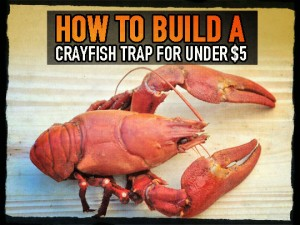 Crayfish Trap