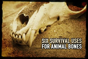 Survival use for animal bones