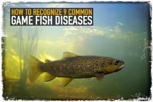 Game Fish Diseases