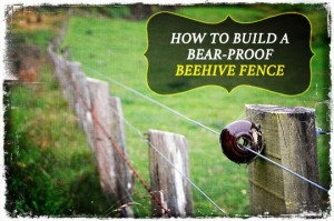 Bear Proof Beehive Fence