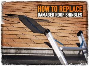 Damaged Roof Shingles