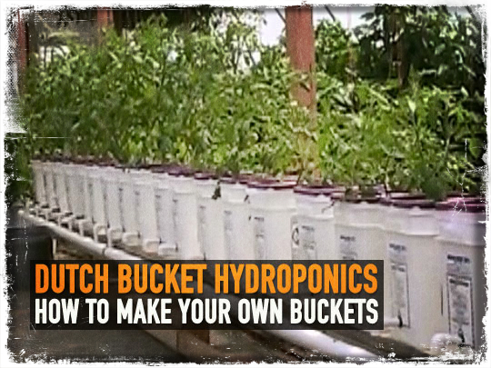 Dutch Bucket Hydroponics: How to Make Your Own Buckets