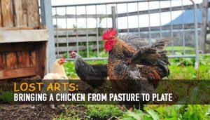 Chicken Pasture to Plate