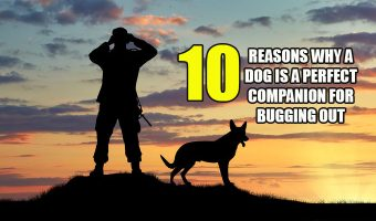 10 Reasons Why a Dog is a Perfect Companion for Bugging Out