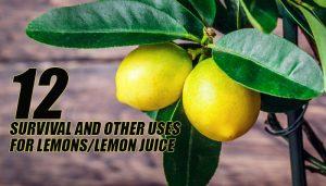 Lemon Survival Uses