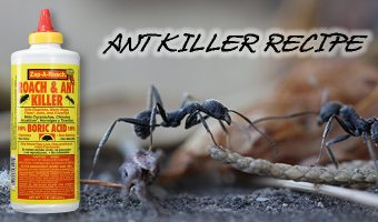 Ant Killer Recipe
