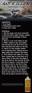 Ant Killer Infographic