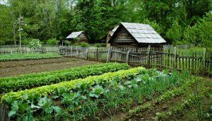 Survival Garden