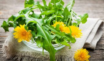 Cooking and Eating Dandelion Greens and Why They are Bitter